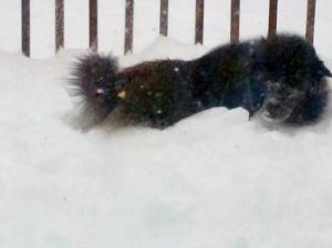 bear b loves the snow